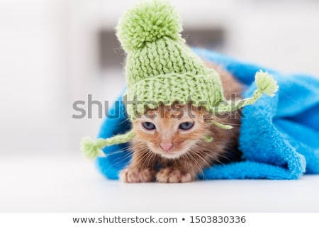 Cute kittten resting after bath rolled in a towel Stock photo © ilona75