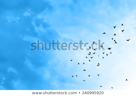 a seagull birds flying in the blue sky stock photo © boggy