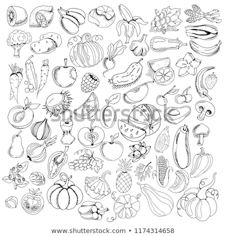 collection of doodle organic vegetables elements Stock photo © Margolana