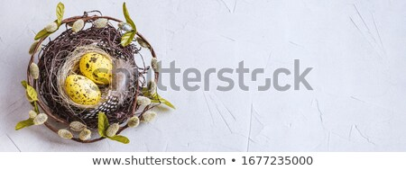 Banner with Quail eggs in the nest on wooden background with willow branch. Stock photo © Illia