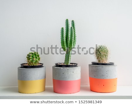 Plant In Pot On Pink Background Stock photo © AndreyPopov