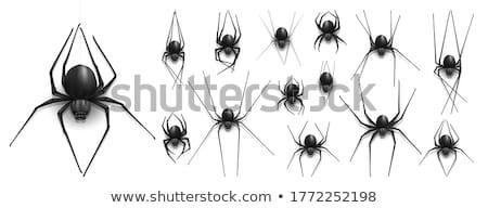 Aranha isolado ícone animal vetor natureza Foto stock © Imaagio