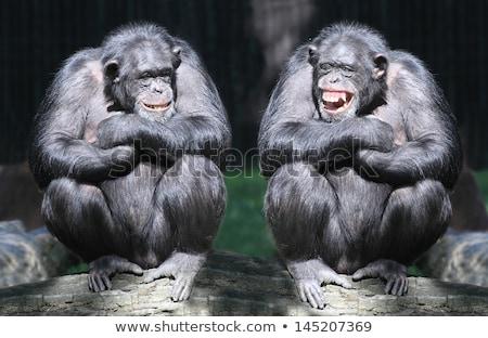 Boldog állatok állatkert illusztráció terv keret Stock fotó © bluering