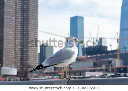 Martı ahşap gökyüzü vücut kuş mavi Stok fotoğraf © Harveysart