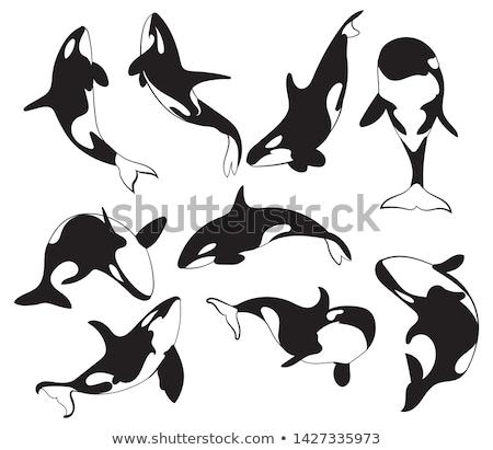 Cartoon lata ocean basen niebieski skok Zdjęcia stock © dagadu