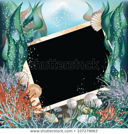 Photo frame with seashells in style scrapbooking, vector illustration Stock photo © carodi