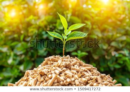 biomassza · energia · üzemanyag · anyag · természetes · Buenos · Aires - stock fotó © stevanovicigor
