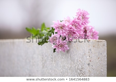headstone and flowers Stock photo © Marcogovel