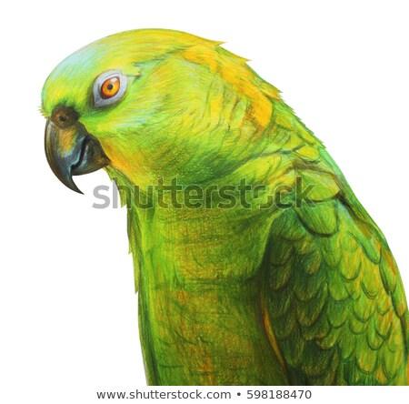 Venezuela Amazon papağan göz doğa arka plan Stok fotoğraf © eriklam