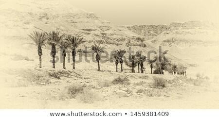 bush · dode · zee · dode · gedekt · zout · ondiep - stockfoto © eldadcarin