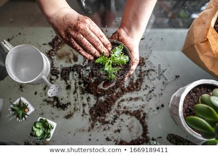 növény · Föld · kicsi · ásó · nő · tart - stock fotó © alphababy