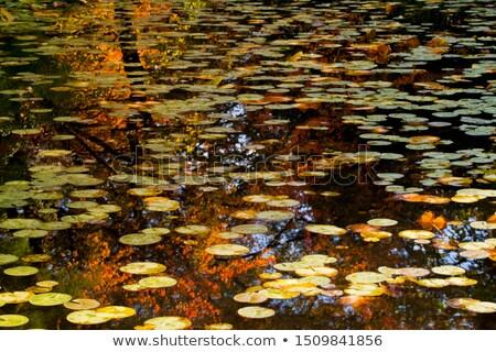 Orange Yellow Lily Pads Water Reflections Van Dusen Gardens  Stock photo © billperry