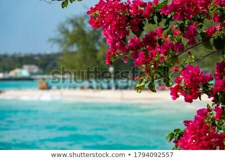 Turkuaz deniz kıyı Yunanistan yaz Stok fotoğraf © Mps197