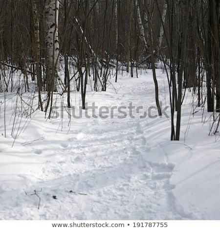 Trees on a snow covered landscape, Orangeville, Dufferin County, Stock photo © bmonteny