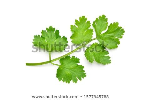 Stok fotoğraf: Kişniş · gıda · ahşap · mutfak · tablo · yeşil