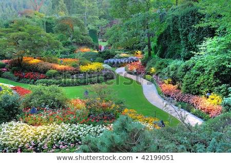 красивой декораций садов природы саду путешествия Сток-фото © jirivondrous
