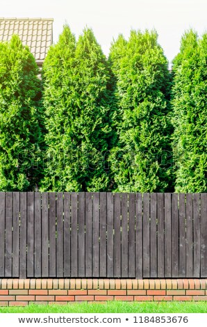 Brown wooden fence and thujas hedge Stock photo © Taigi