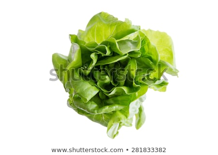 Head of fresh organic butter crunch lettuce Stock photo © ozgur