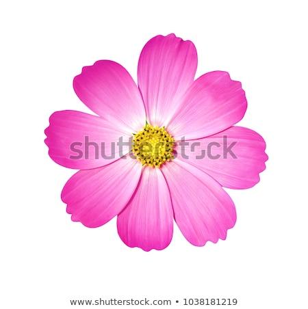 roze · bloemen · veld · Thailand · bloem · landschap - stockfoto © ptichka