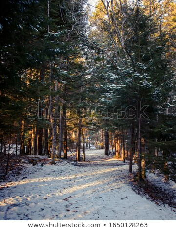 estranho · luz · floresta · misterioso · árvores · dente - foto stock © sirylok