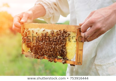 Beekeeper and honeycomb with bees and honey Stock photo © jordanrusev