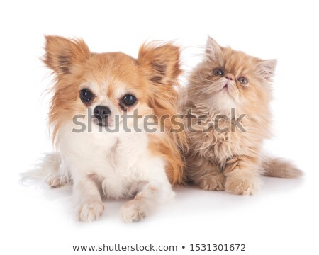 Stockfoto: Kitten · hond · kat · bed · huisdier · drie