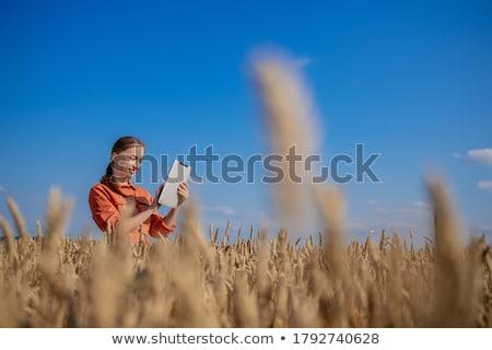 Фермеры стороны ячмень плантация области ответственный Сток-фото © stevanovicigor