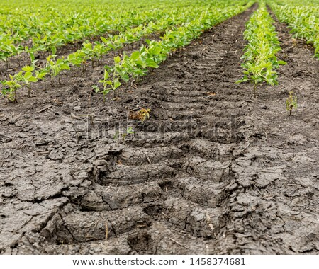 Agricultural tractor tyre track in dry dirt Stock photo © stevanovicigor