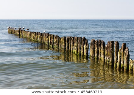 Wooden breakwater built of thick logs Stock photo © marekusz