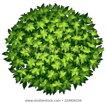 Estándar ilustración naturaleza hoja hojas Foto stock © bluering