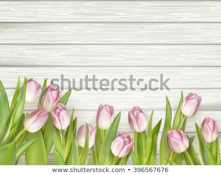 розовый тюльпаны белый древесины прибыль на акцию 10 Сток-фото © beholdereye