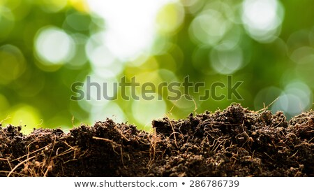 Soil close up Stock photo © stevanovicigor