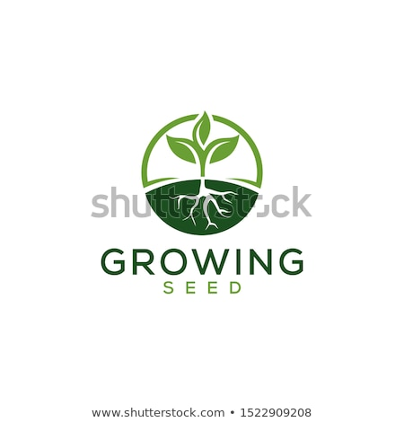 Seed Root Flat Icon Stock photo © ahasoft