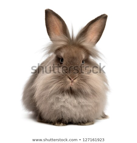 frontal shot of a little rabbit on white stock photo © shevs