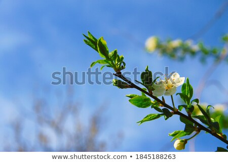 Spring flowers baackground Stock photo © Lana_M