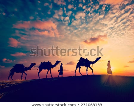 Two people and camel in the desert vector illustration