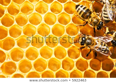 Close up view of the working bees on honey cells, Fresh honey in comb and working bees. Stock photo © FreeProd
