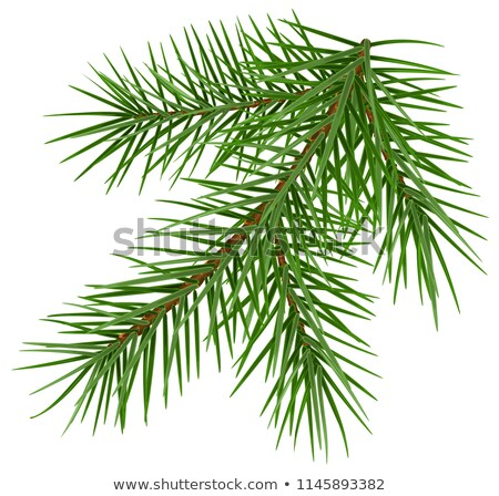 Green fluffy spruce branch accessory symbol christmas Stock photo © orensila