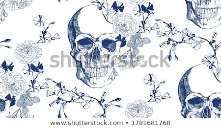 Skull isolated. head of human skeleton. Anatomy illustration Stock photo © popaukropa