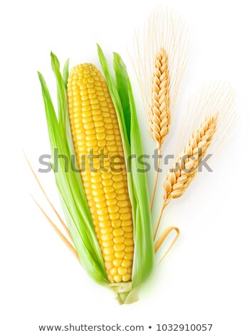 Whole corn maize cob isolated, path Stock photo © maxsol7
