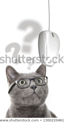 Gato visão problemas olhando mouse de computador óculos Foto stock © olivier_le_moal