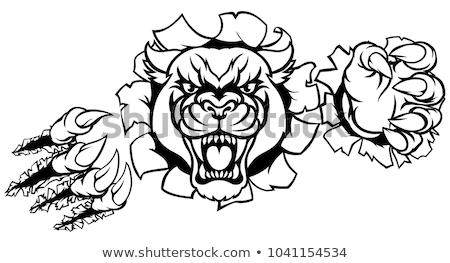Wildcat Angry Mascot Background Breakthrough Stock photo © Krisdog