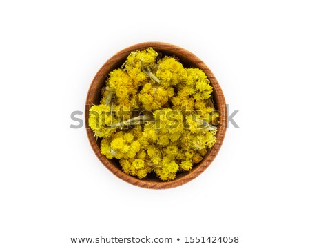 Helichrysum arenarium flowers Stock photo © AGfoto