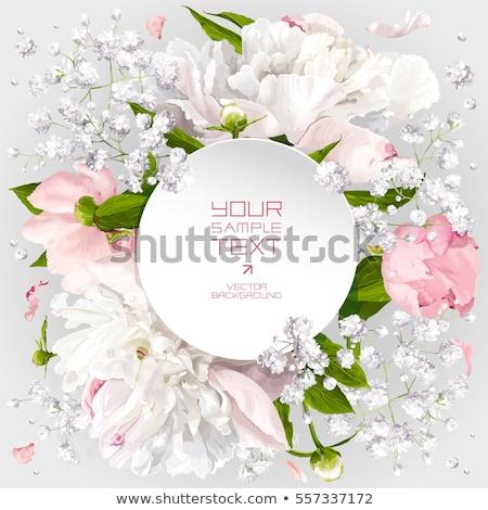 Gül çiçek kart vektör suluboya bağbozumu Stok fotoğraf © frimufilms