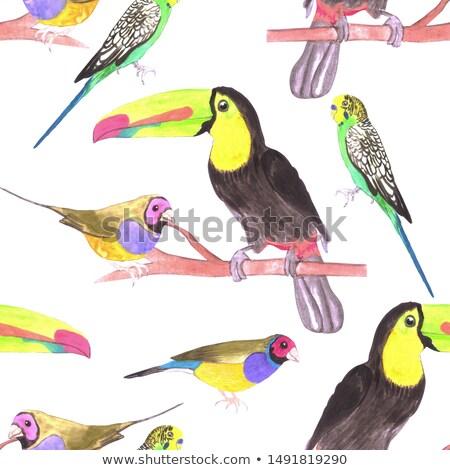 красочный ПЭТ птиц филиала акварель бесшовный Сток-фото © shawlinmohd