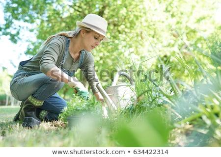 nő · kertészkedés · kaukázusi · középkorú · nő · tart · virágok - stock fotó © iofoto