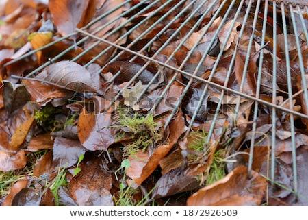 I have a rake Stock photo © photography33