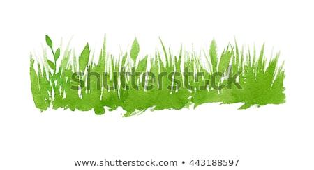 Grama aquarela ilustração árvore abstrato fundo Foto stock © Galyna