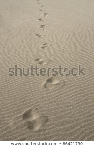 waterside footprints in the sand Stock photo © prill