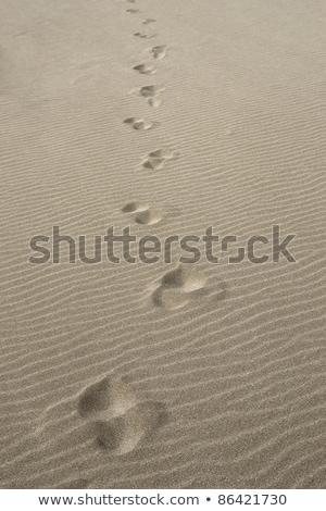 Voetafdrukken zand landschap overstroming water zee Stockfoto © prill